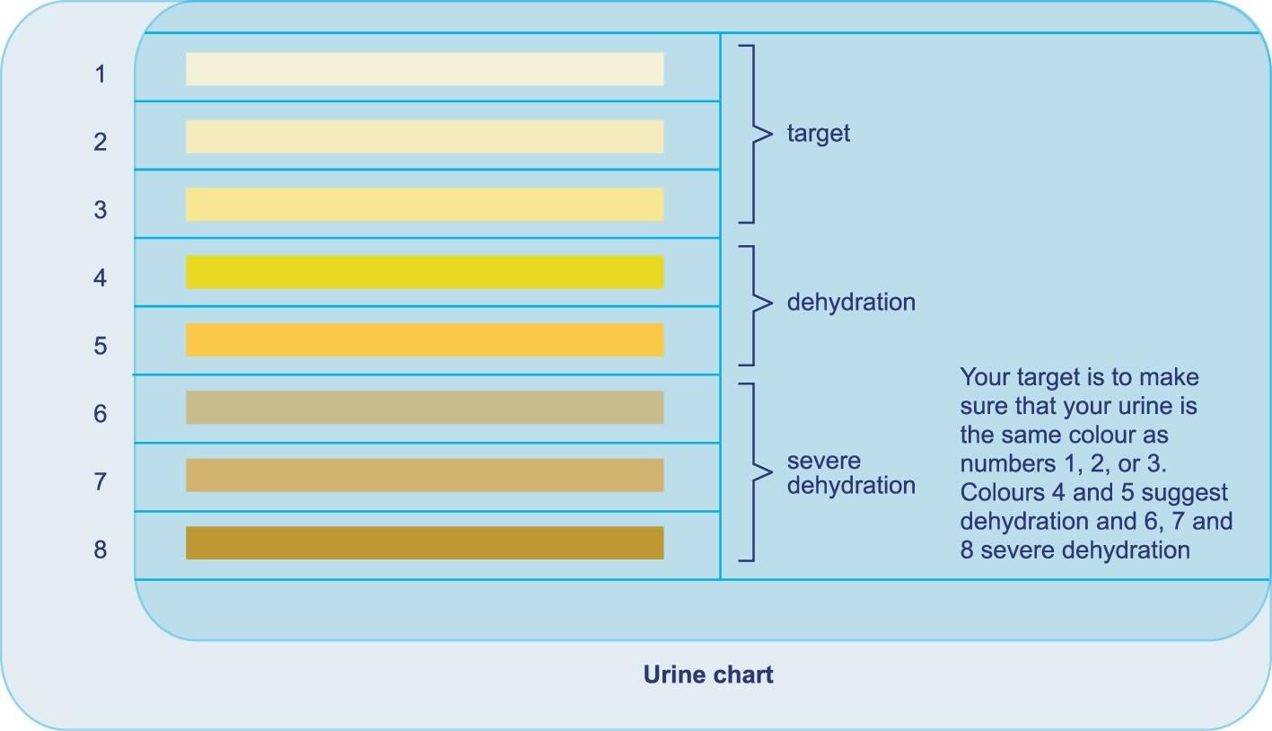 【一目でわかる!】尿の色で熱中症の危険度の診断をしよう!【熱中症対策その1】